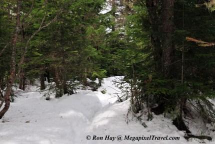 RON_3311-Snowy-trail