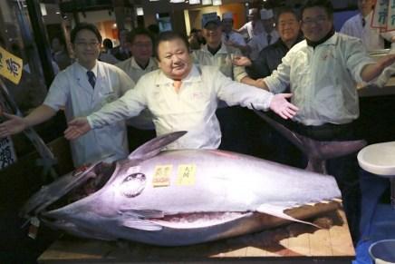 ¡RÉCORD! Atún rojo vendido por más de $632.000 en una subasta en Japón