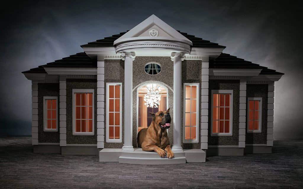 La mascota de un mega rico se merece lo mejor lujosa casa para perros por - La casa de la mascota ...