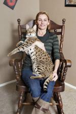 Ázijský americký dospievajúci mačička