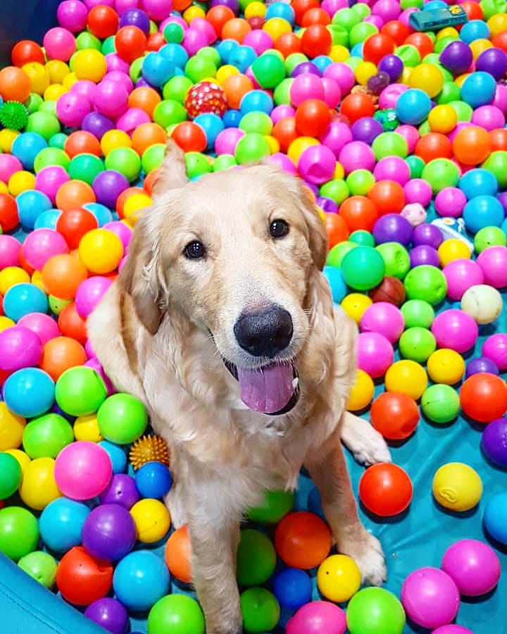 DOG IN THE BALLPIT