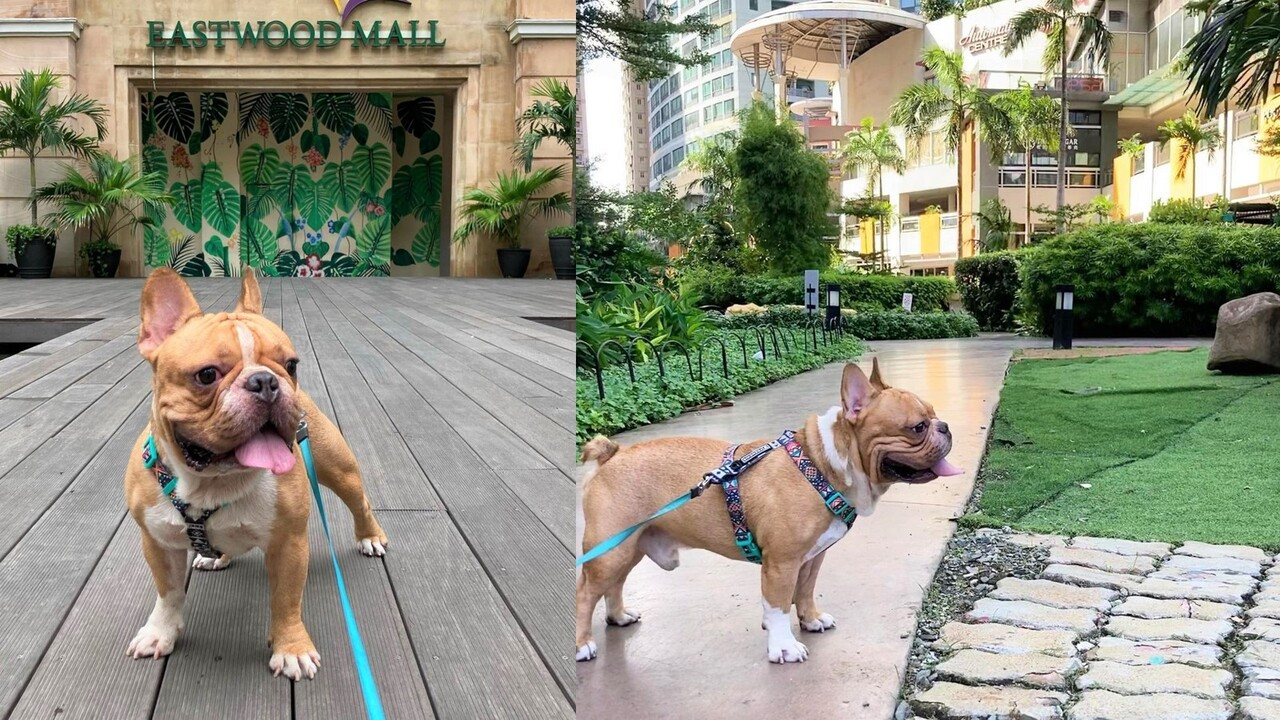 Eastwood City: Pet-Friendly Malls in Manila