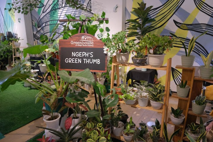 Ngeph's Green Thumb (G/F) offers varieties of snake plants and other indoor plants