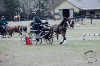 IMG_4412_katydid_derby