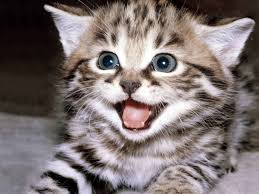 Here's a random photo of a joyous kitten to illustrate my reaction.