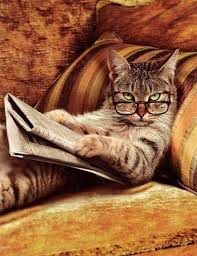 This cat definitely has an opinion of your book.