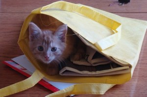 And one cat picture, for variety. But keeping with the them of baby animals, I picked one of my cat as a kitten.