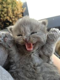 happy kitten 2