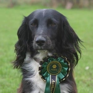 dog training lincoln
