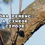 Jöjjön Móra Ferenc: A cinege cipője verse.