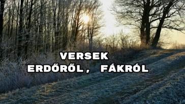 Versek erdőről, fákról