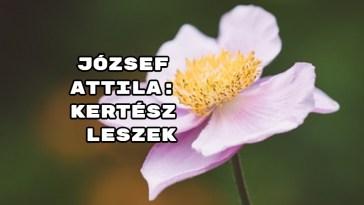 Ajánljuk! József Attila: Kertész leszek