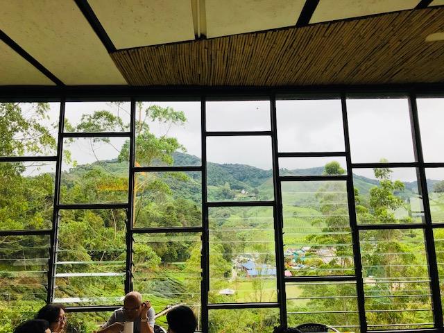 View from Boh Tea plantation