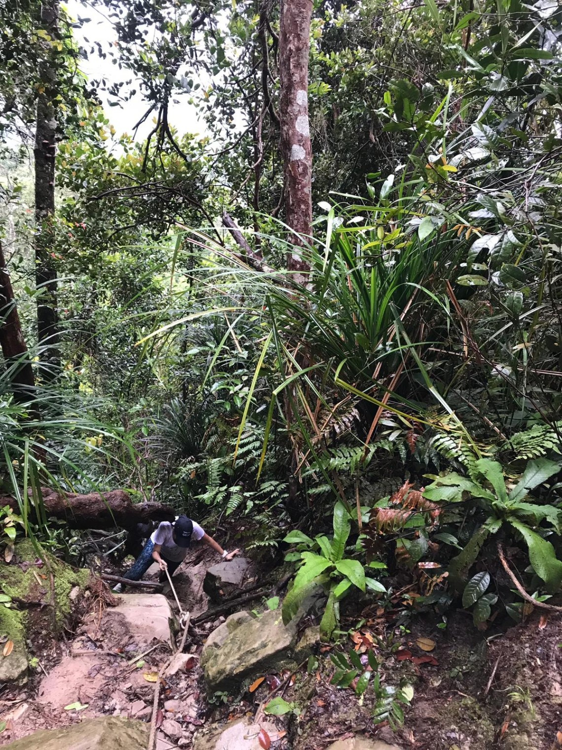 Gunung Panti Hike 10