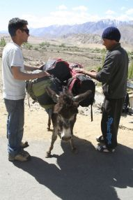 Preparing the donkey for our trek
