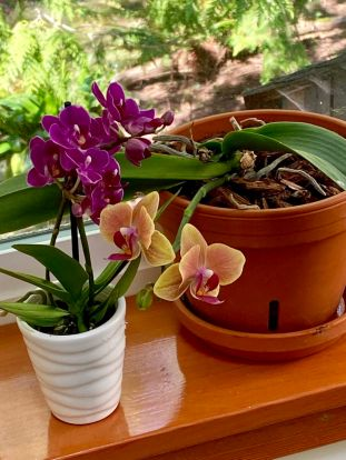 Orchids are rarin' to go!