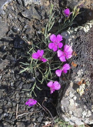 Tenacious flowers