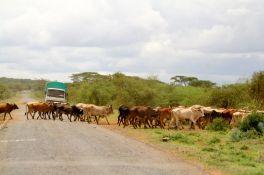 Tanzanian Trip #1 055