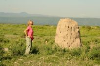 Now that's one big anthill! Or is it termites?
