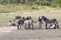 Tanzanian Trip #2 466