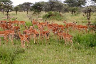 Tanzanian Trip # 3 033