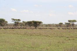 Tanzanian Trip # 3 127