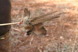 Shot the bird through the nest with an arrow.