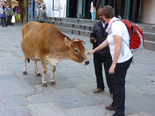 Christy went wild over the wandering cows