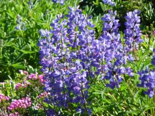 Wildflowers abound....