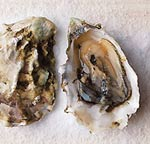 Oyster photo from Gourmet