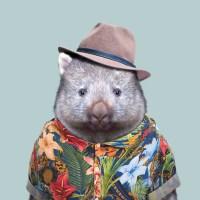 wombat-vombatus-ursinus-copia-691x691