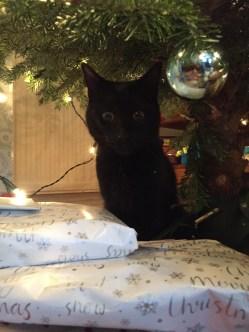 Leo under the tree!