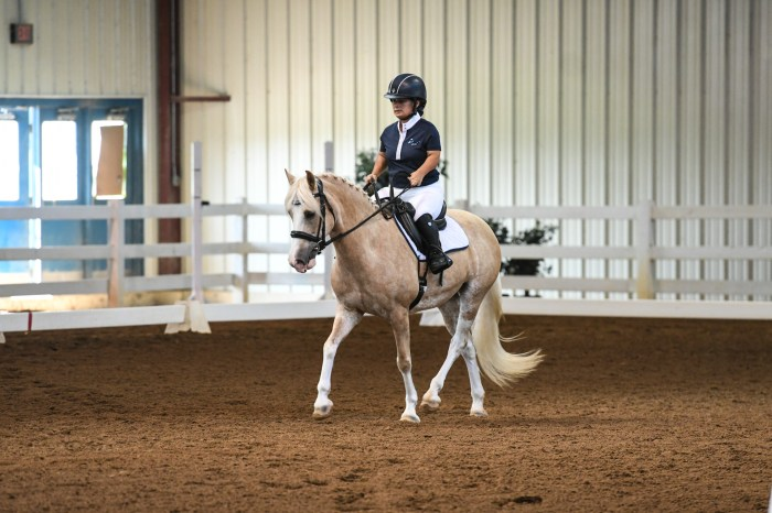 para dressage rider welsh pony