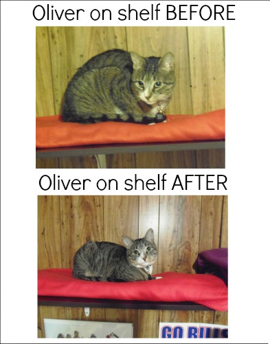 Oliver shelf BEFORE and AFTER