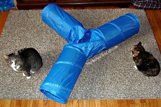 Cat-Tunnel-Oliver-Jewel