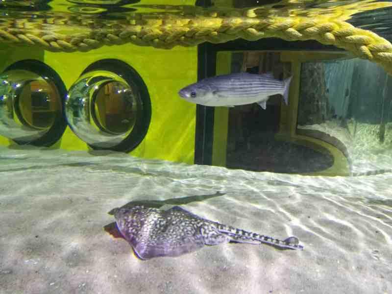 Sealife Great Yarmouth