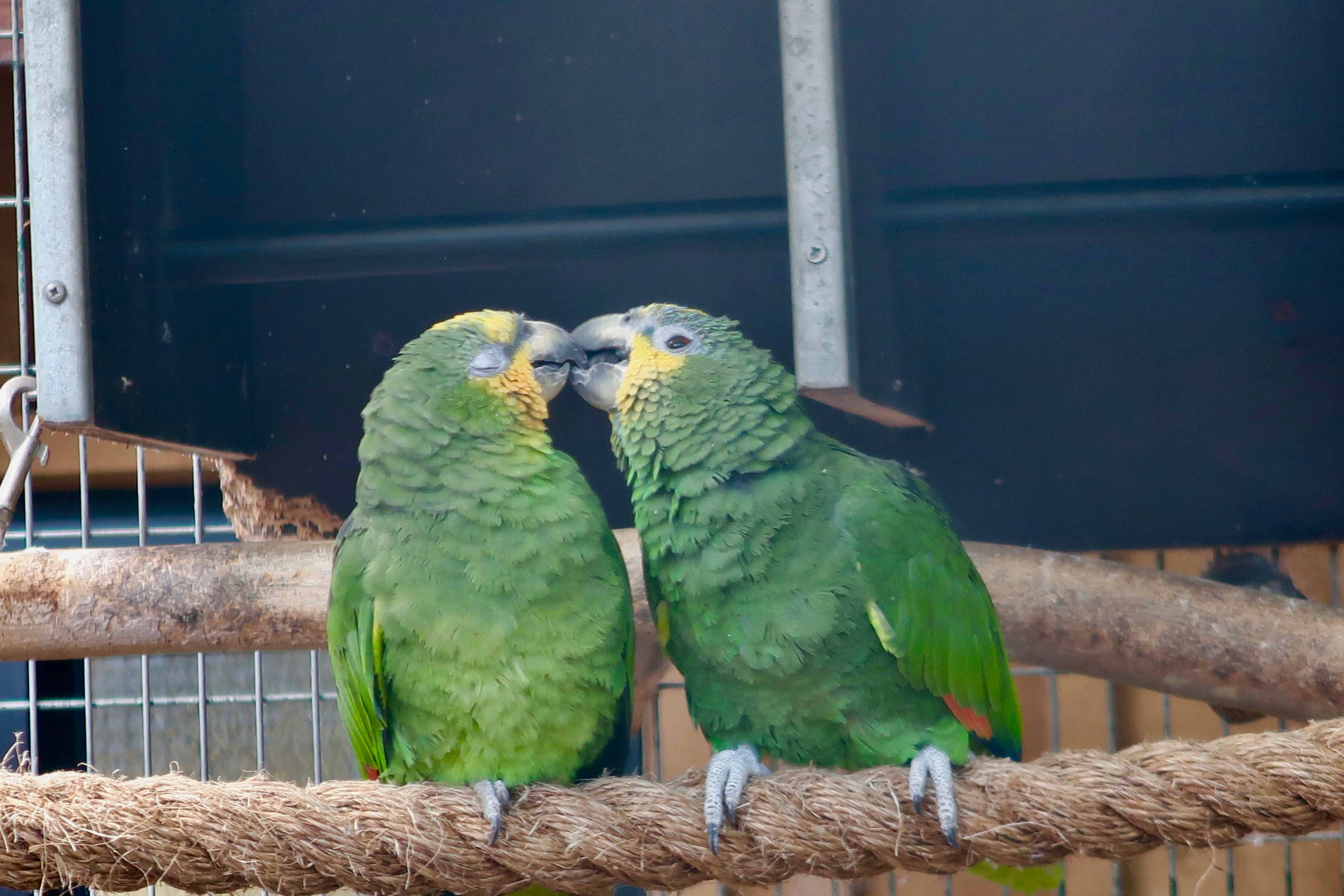 Parrots at Amazona Zoo