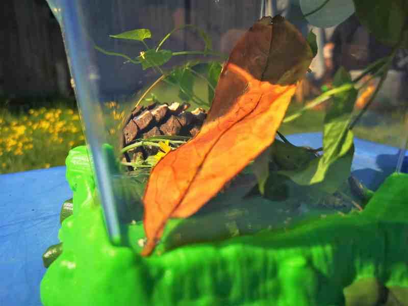 GeoSafari Jr. Critter Habitat