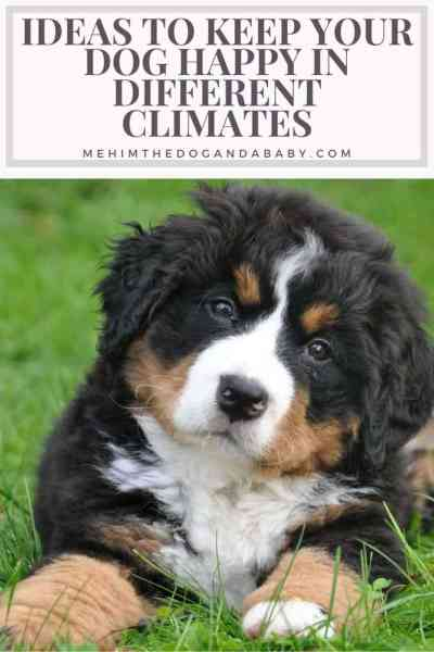 Ideas To Keep Your Dog Happy In Different Climates