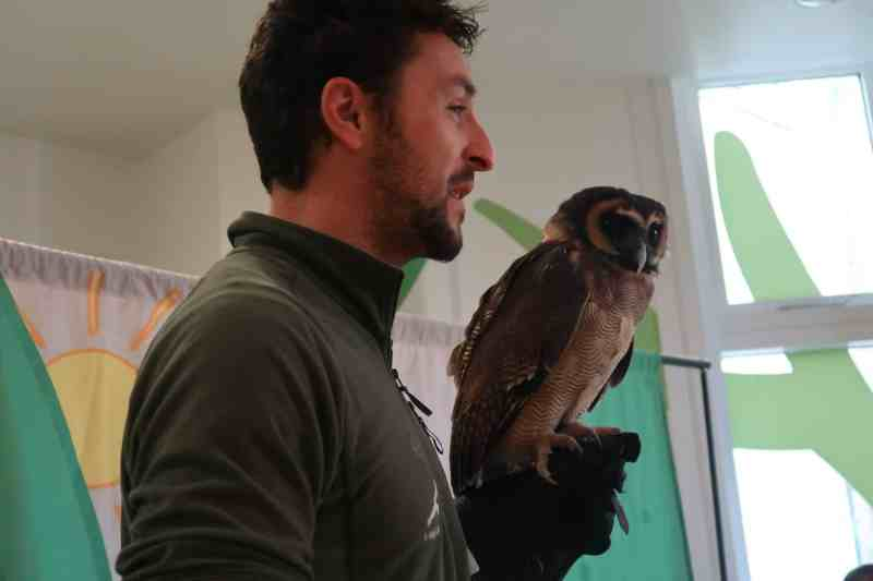 Center Parcs Activities: Baby Owls