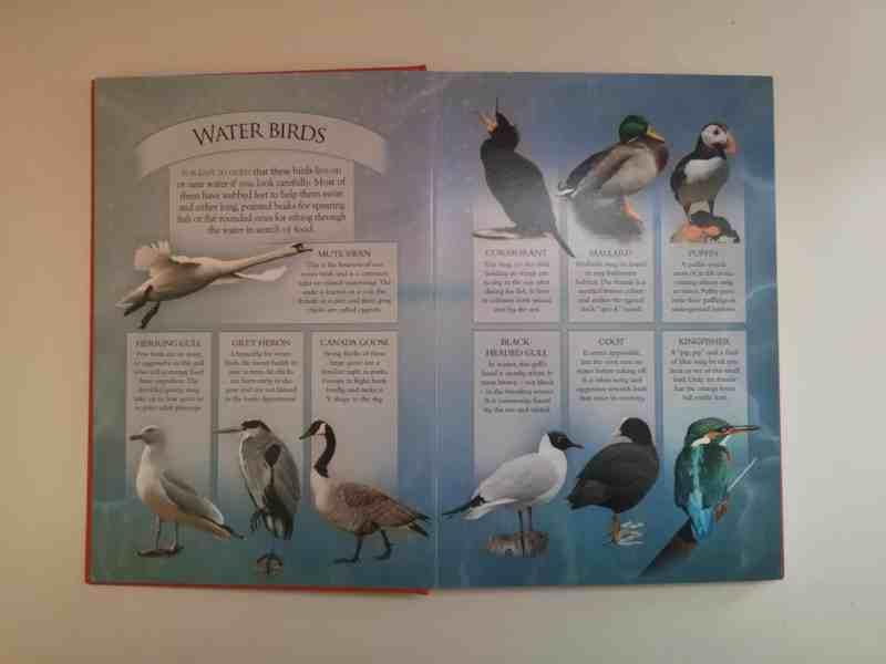 Know Your Nature: British Wildlife