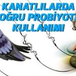 guvercin_probiyotik