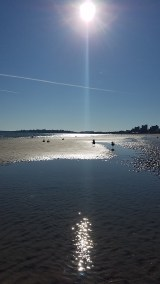 November Sunbeam & Seabirds