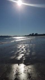 November Sunbeams & Seabirds