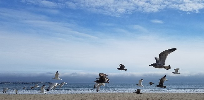 Seagulls Being the View