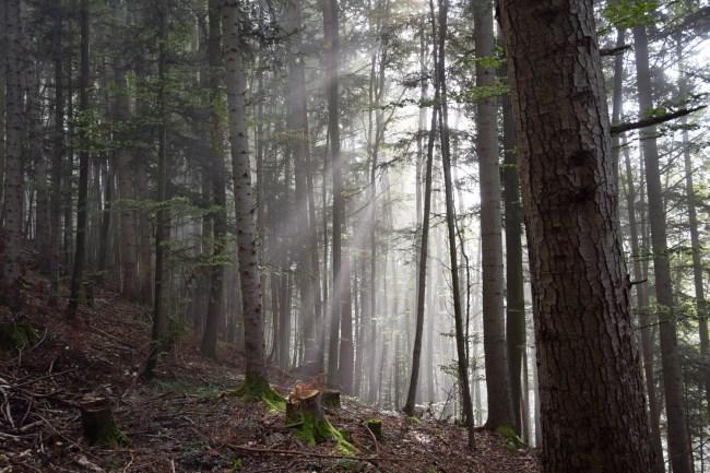 Im Wald beim Aufstieg