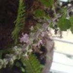 Essay on tulsi plant in hindi