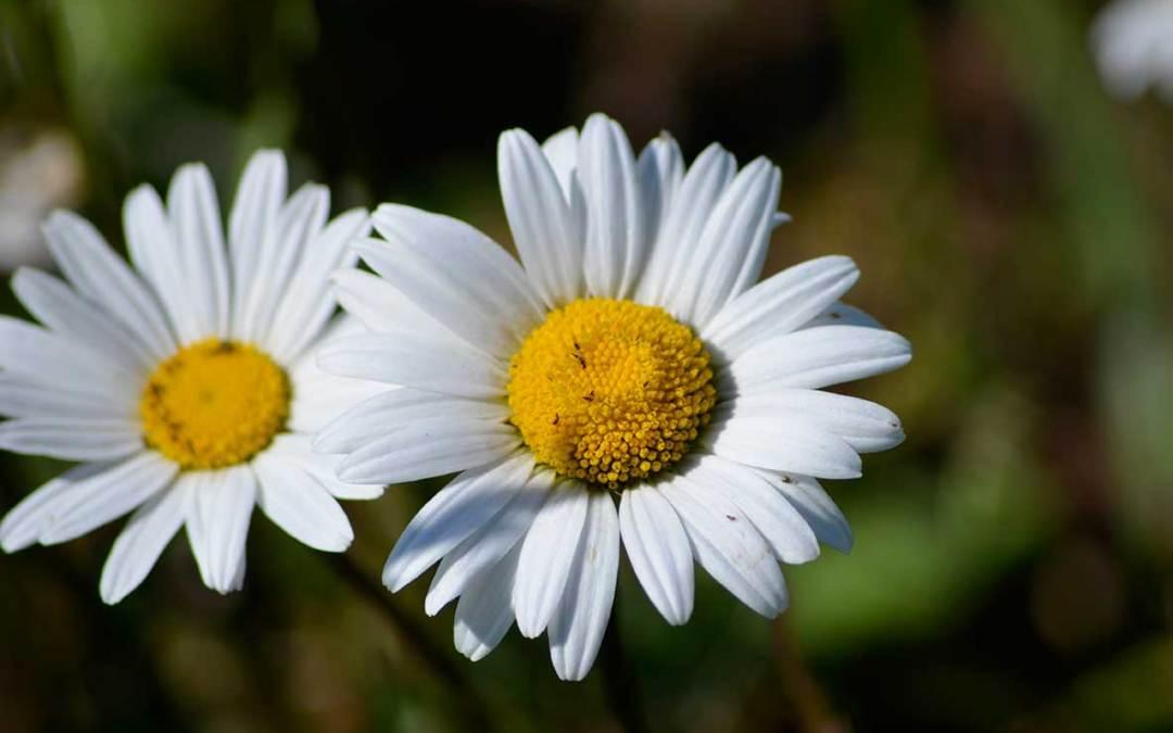Flowers today – gone tomorrow