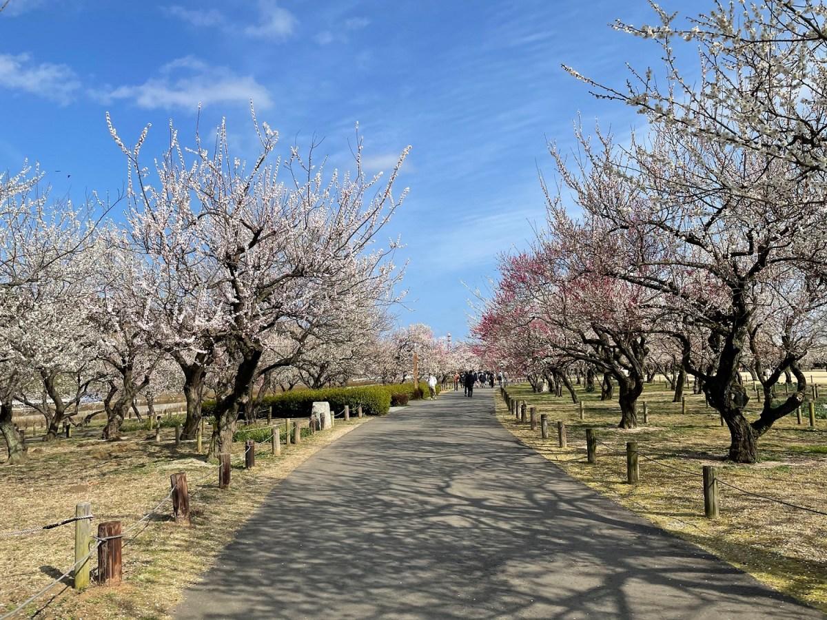 水戸偕楽園梅まつり2021-03