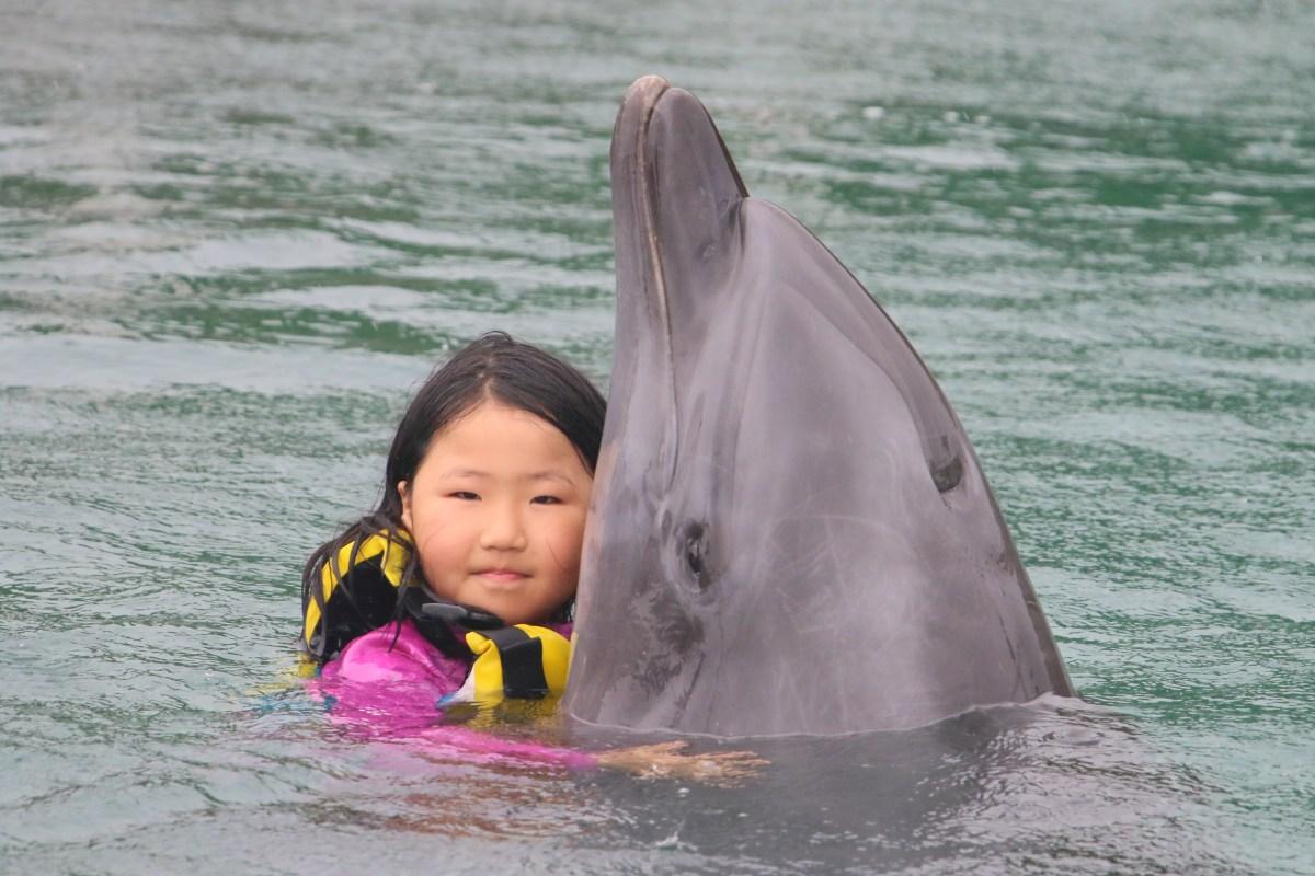 イルカと遊ぶ